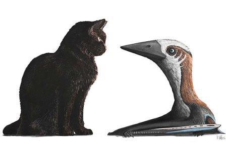 Кошка и вновь открытый птерозавр
