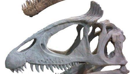 """Тираннозавры носили цветные """"ирокезы"""", выяснили ученые"""