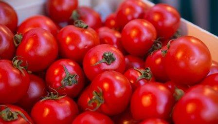 Почему помидоры становятся невкусными в холодильнике