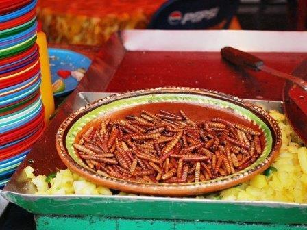 Доступный источник пищевого железа ищут среди насекомых