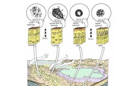 Живые существа заселили сушу еще в архее