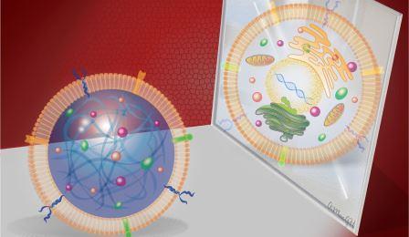 Ученые синтезировали искусственные стволовые клетки
