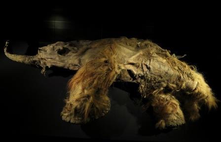 Российские и южнокорейские ученые впервые расшифруют геном древних животных