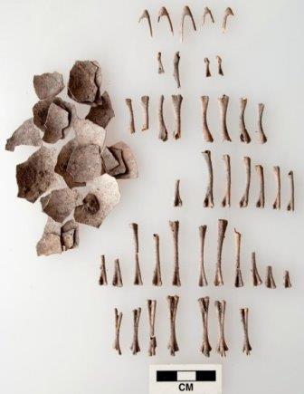 Скорлупа яиц и кости индеек из Оахаки
