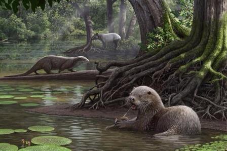 Найдены останки доисторической выдры размером с волка
