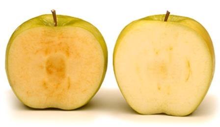 Новый сорт ГМО-яблок не темнеет на срезе