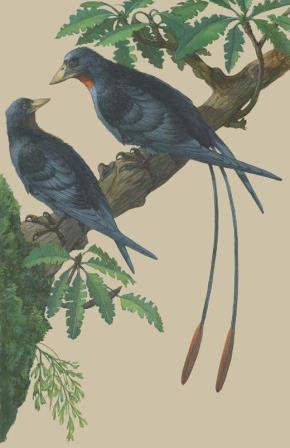Реконструкция пары Eoconfuciusornis