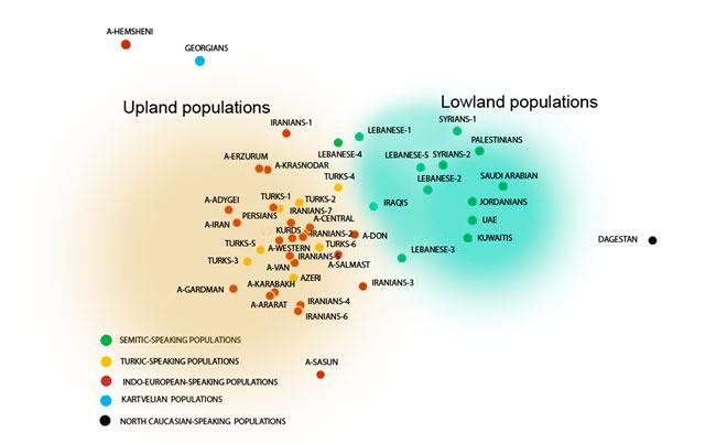График генетических взаимоотношений народов Передней Азии (по данным о Y-хромосоме)