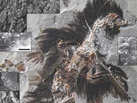Меловой кузен современных птиц раскрыл секреты эволюции