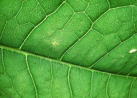 В искусственной клетке собран фотосинтетический аппарат