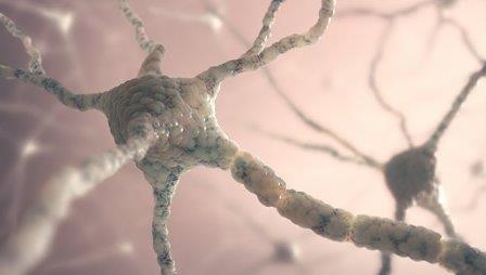 Открыт гормон, ускоряющий работу мозга