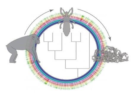 Союз вшей и бактерий существует двадцать миллионов лет