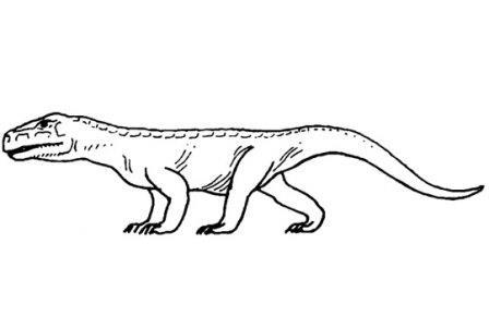 Dongusuchus