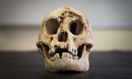 Реконструкция черепа Homo floresiensis