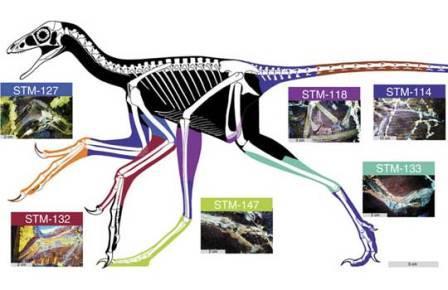 Окаменелости динозавров простимулировали лазером