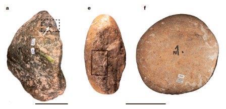 Предполагаемые орудия из Церутти Мастодон