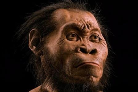 Реконструкция облика Homo Naledi