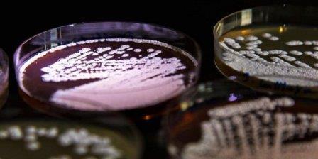 Колония актинобактерий