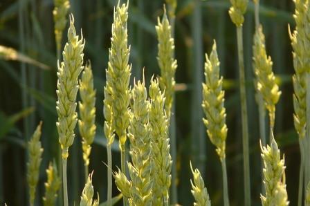 Истощение почв привело к централизации власти в древней Месопотамии