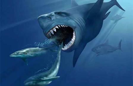 Carcharocles megalodon охотится на китов Реконструкция: Karen Carr охотится на китов