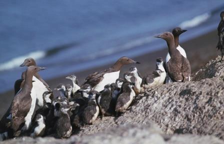 Неустойчивая погода довела южных птиц до Арктики и ударила по популяции северных пернатых