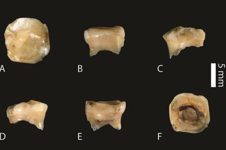 Зуб самого древнего денисовца - девочки 10-12 лет