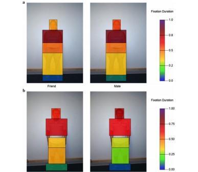 Продолжительность взгляда мужчин (a) и женщин (b) на разные части тела потенциального друга и романтического партнера
