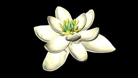 Реконструкция облика первого цветка на Земле
