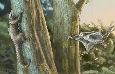 В небе юрского периода гордо реяли пушистые летяги