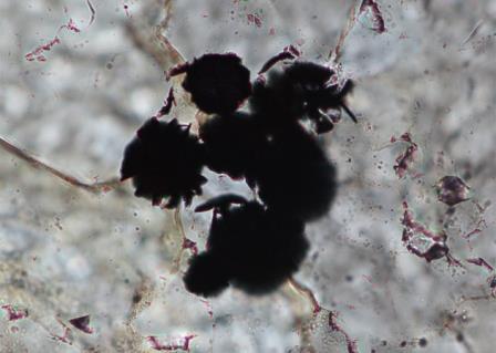 На экране микроскопа показаны темные зерна графита, которые могут содержать следы древней жизни на Земле