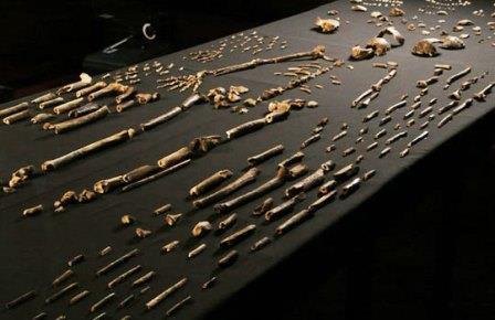 Голые кости: пять предков человека, известных всего по горстке окаменелостей