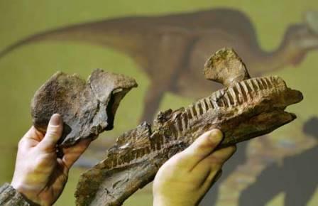 Гадрозавры предпочитали животный белок