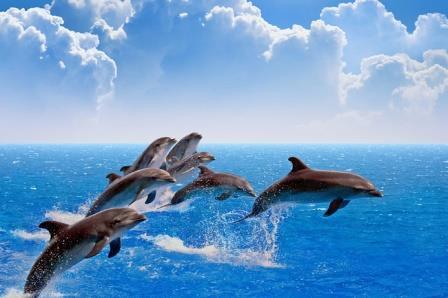 Дельфины © Igor Zh. / Фотодом / Shutterstock