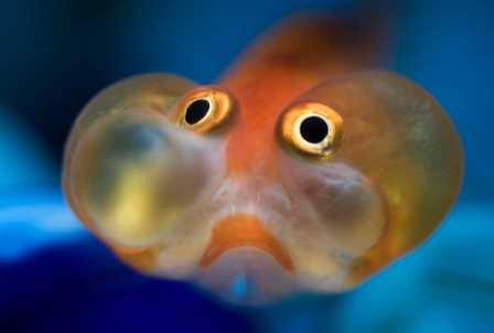 У рыб обнаружили эмоциональные состояния