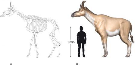 Реконструкция облика Decennatherium rex