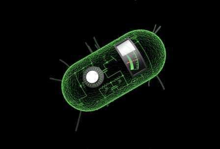 Ученые превратили бактерию в записывающее устройство