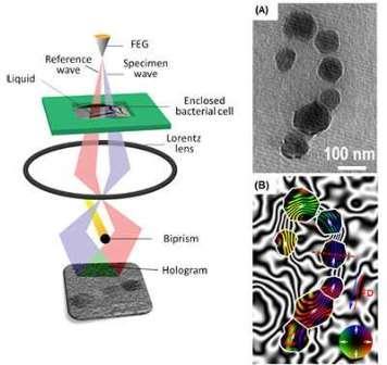 принцип работы электронной микроскопии с жидкостной ячейкой