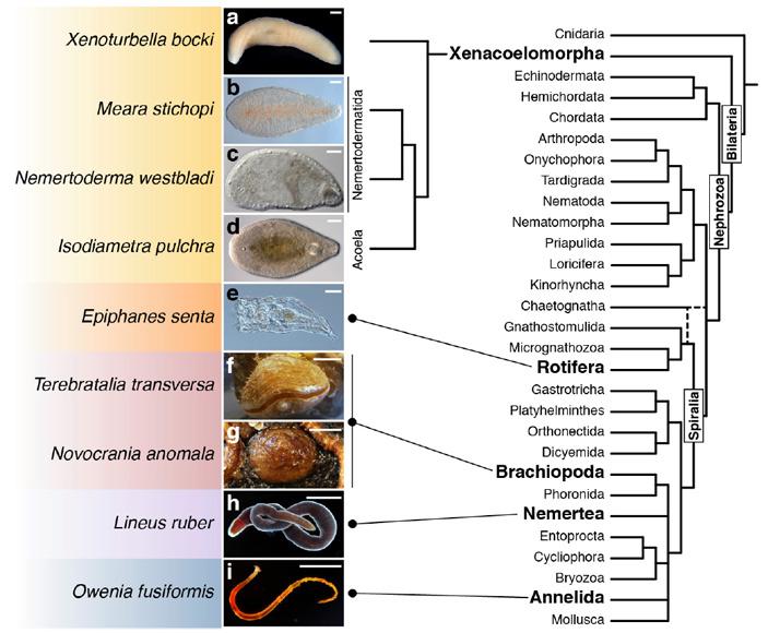 Изученные виды и их положение на эволюционном дереве