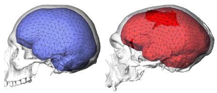 Рис. 1. Мозг современного человека (слева) и неандертальца из Ла Шапель-о-Сен. Показана триангуляционная сетка, использовавшаяся для анализа формы мозга. Изображение из обсуждаемой статьи в Science Advances