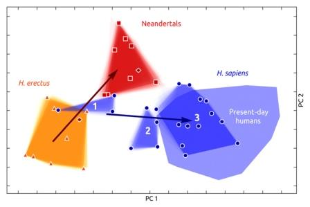Рис. 3. Анализ формы эндокрана древних и современных людей при помощи метода главных компонент.