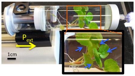 Ванна для введения наночастиц через устьичные щели растений при повышенном давлении