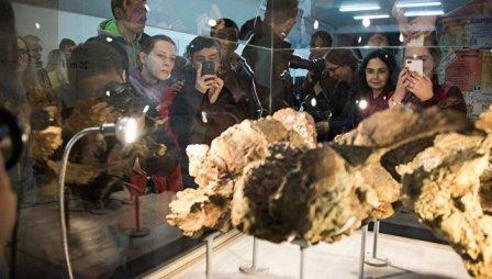 Останки сибиротитана в музее ТГУ