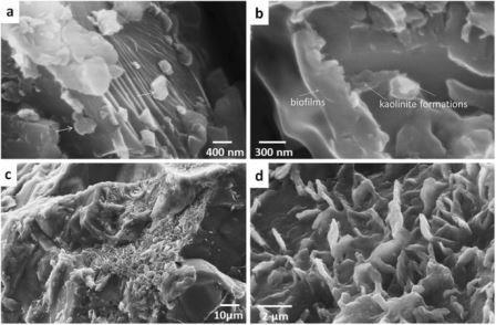 Глинистые минералы в эндолитическом органо-минеральном горизонте
