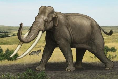 Реконструкция Paleoloxodon antiquus ©  Carl Buell