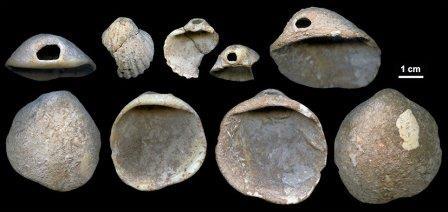 Ракушки, игравшие роль палитр для неандертальских художников из пещеры Авионес © J. Zilhão