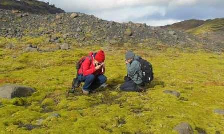 Ранняя жизнь на земле напоминала криптогамные наземные покрытия, подобные этому лавовому полю в Исландии © Paul Kenrick