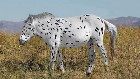 Древняя лошадь Пржевальского в представлении художника © LUDOVIC ORLANDO, SEAS GODDARD AND ALAN OUTRAM
