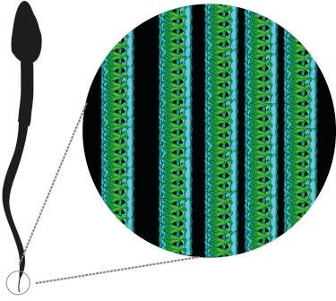 Спиральные структуры TAILS © University of Gothenburg