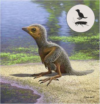 Реконструкция птенца птицы, жившей на Земле 127 миллионов лет назад © Raúl Martín
