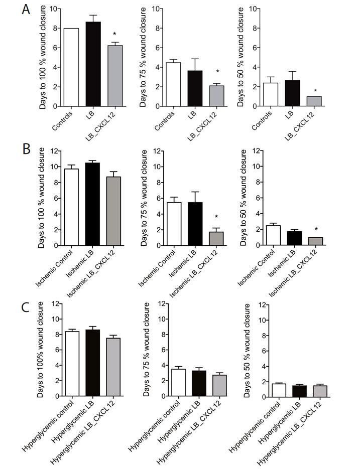 Ускорение заживления ран мышей при обработке лактобактериями, синтезирующими хемокин CXCL12